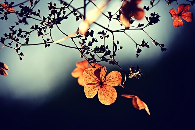 flower-3876195_640